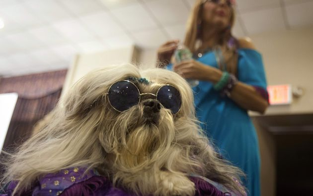 Un perro luce unas gafas en el New York Pet Fashion Show. Foto: REUTERS
