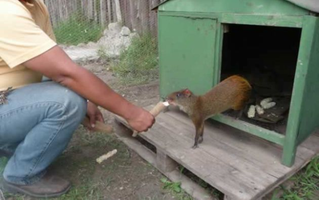 Algunas especies serán reubicadas en los zoológicos de El Oro, Pastaza y Guayllabamba. Foto: Centro de Rescate Animal Guayabillas