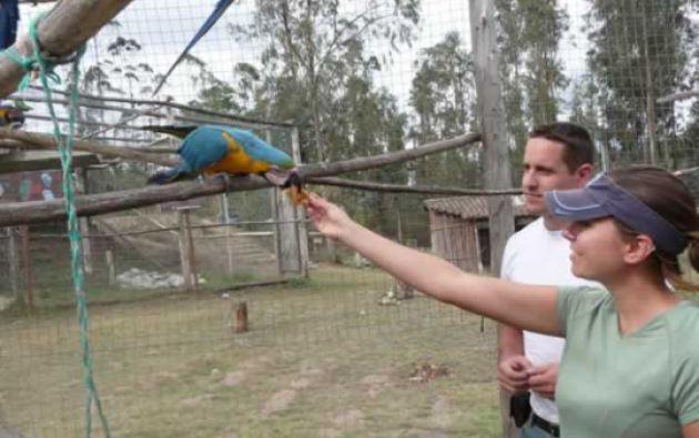 Foto: Centro de Rescate Animal Guayabillas