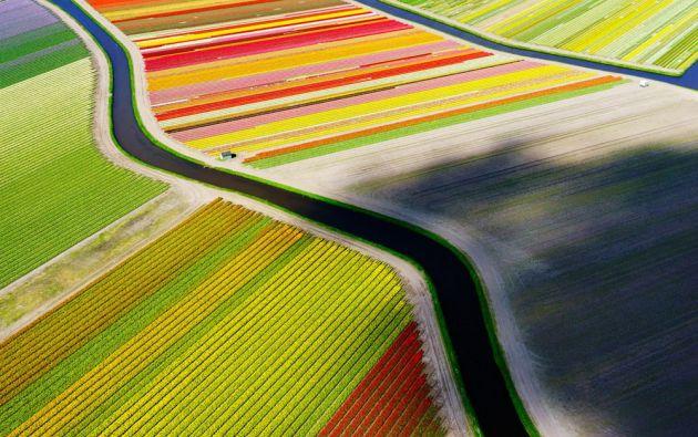 Vista de pájaro de campos de tulipanes cerca de Voorhout en los Países Bajos/ ANDERS ANDERSSON