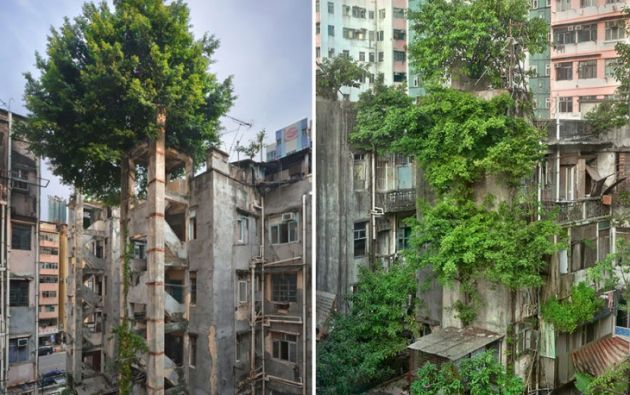 Árboles crecen en edificios de apartamentos en Hong Kong. Foto Romain JL