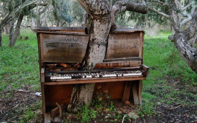 Un árbol ha crecido a través de un viejo piano. California.  Foto: Crackoala