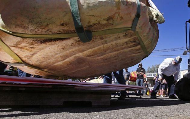 Un juez inspecciona una entrada durante el concurso gigante calabaza pesaje bajar en Rochester justo Foto: Charles Krupa / AP
