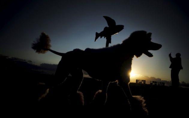 Un caniche pasa al amanecer ante la escultura 'Fliying Fish' de los artistas australianos Gillie y Marc Shattner. REUTERS