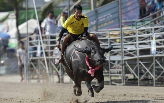 Un jockey tailandés compite durante la carrera anual de búfalos de agua en la provincia de Chonburi, al sur de Bangkok (Tailandia).  SAKCHAI LALIT (AP)