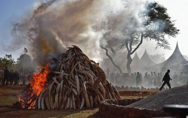 Gente se coloca cerca de una pila de 15 toneladas de marfil de elefante en Kenia en el Parque Nacional de Nairobi. Foto: AFP