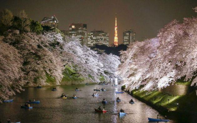 Personas que reman disfrutan la vista nocturna de flores de cerezo en flor en Chidorigafuchi foso en Tokio, Japón. 30 de marzo, 2015. Kimimasa Mayama—EPA