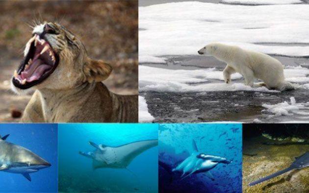 Foto: Facebook/Convention of Migratory Species