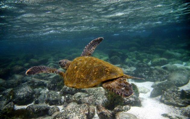 Los desechos plásticos son una de las principales amenazas para la vida marítima en el planeta. Foto: AFP