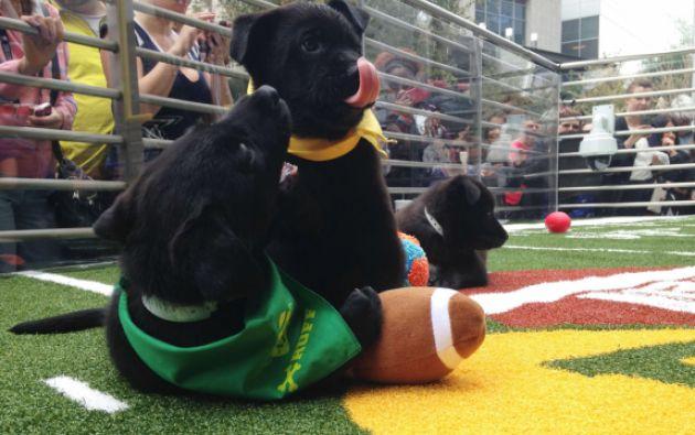 """La atención del Super Bowl es aprovechada para realizar eventos como """"Puppy Bowl"""", una campaña para alentar adopciones de animales. Foto: REUTERS/Daniel Wallis"""
