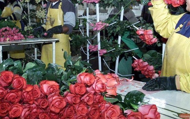 Usarán más de 10.000 flores. Foto: Archivo Vistazo