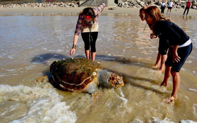 Ésta es la segunda tortuga que aparece muerta en las playas de Montevideo este año. Fotos: Twitter.