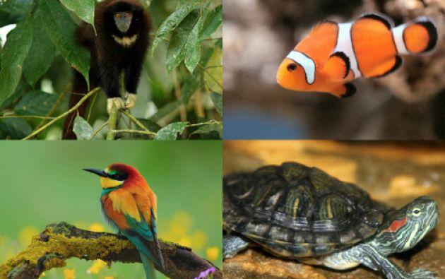 Según el estudio, el peligro de extinción varía de acuerdo a las regiones del mundo, según lo afectadas que estén por el calentamiento.