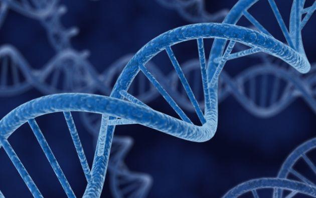 La proteína WRN participa en el mantenimiento de la heterocromatina. Imagen referencial.