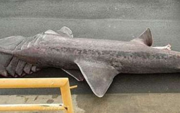 El animal mide 6,3 metros de largo.