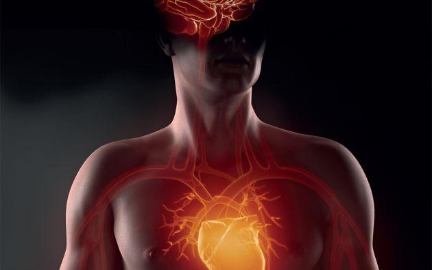 Sin presentar síntomas, la hipertensión va causando daños a órganos tan vitales como corazón, cerebro y riñones, entre otros, los cuales pueden desembocar en eventos fatales.