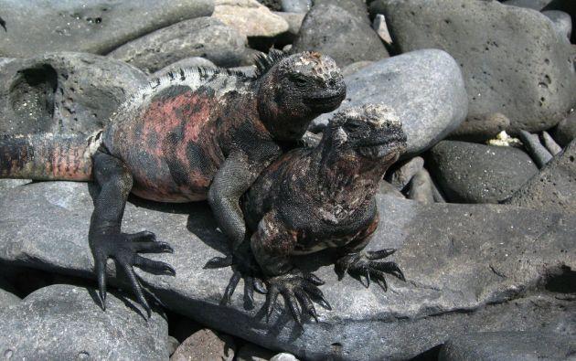Foto: Parque Nacional Galápagos