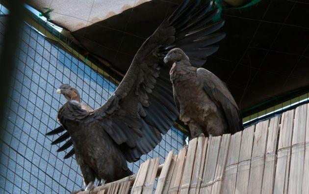 Huayra y Killary. Foto: Facebook / Fundación Zoológica del Ecuador