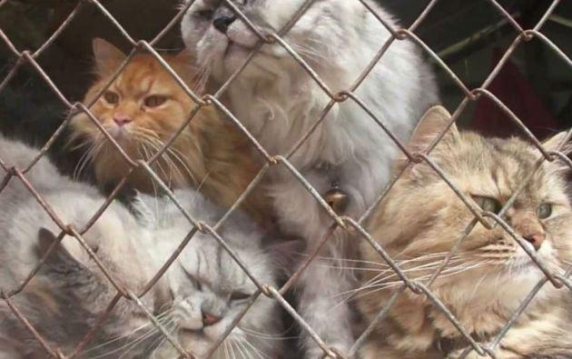 El consumo de carne de gato es ilegal en Vietnam desde hace casi dos décadas.