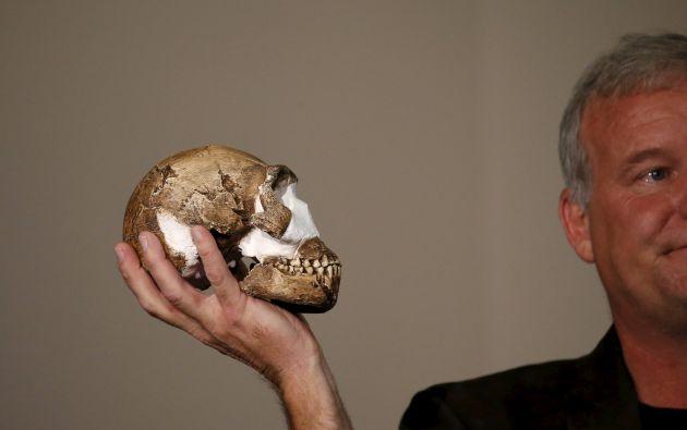 El académico Lee Berger muestra una réplica del cráneo del Homo naledi. Foto: REUTERS.