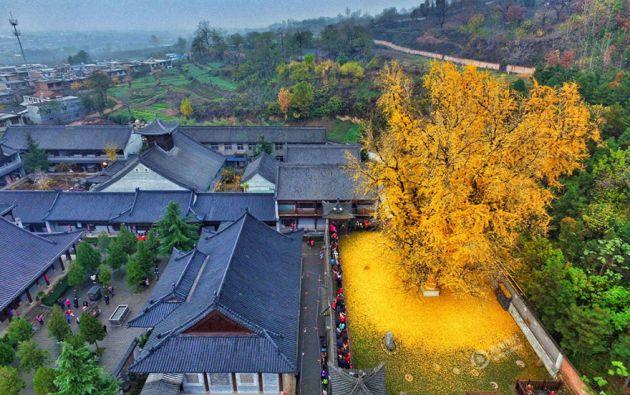 Este espectáculo natural ha llamado la atención de los turistas y sus fotografías inundan las redes sociales. Fotos: yicai.com
