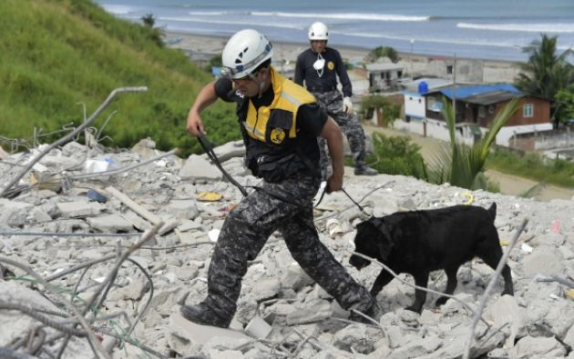Los canes son la herramienta principal de los brigadistas. (Foto: AFP)