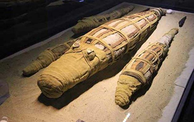 LA HAYA, HOLANDA.- La cocodrilo madre, indica Weiss, fue momificada usando trozos de madera, de lino, tallos de plantas y cuerda. Foto: Ancient Origins.