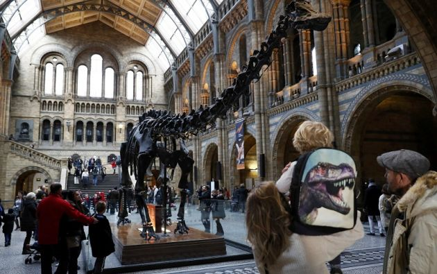 El esqueleto de diplodocus armado con 292 huesos de yeso será sustituido en el museo londinense por el de una ballena que murió varada en una playa irlandesa en 1891. Foto: REUTERS.
