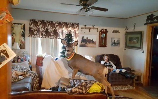 Las autoridades del Departamento de Vida Silvestre de Kansas llegaron al hogar y dispararon varias veces contra el animal. Foto: The Washington Post