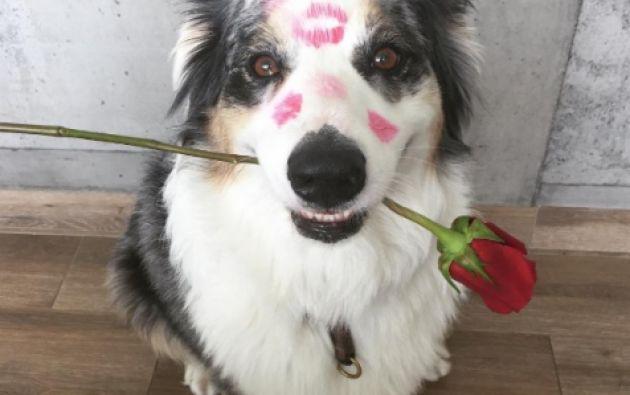 Dylan, en una foto especial para San Valentín.   Foto y video: tomados de la cuenta de Instagram de Romina Miraglia