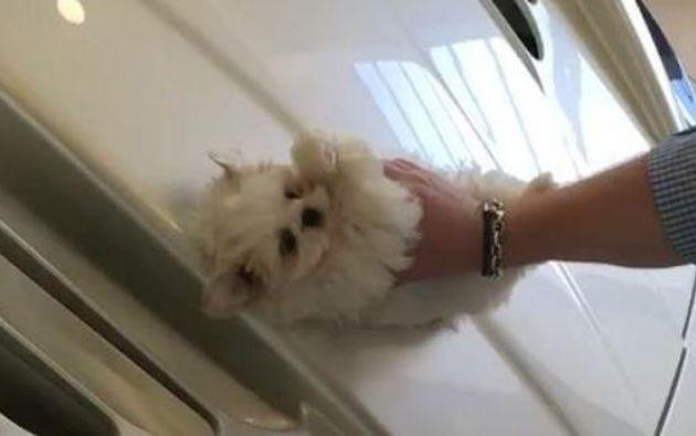 En el fragmento compartido en Instagram, se aprecia a un joven usando su cachorro de pocos meses para quitar el polvo de su lujoso vehículo. Foto: captura de video