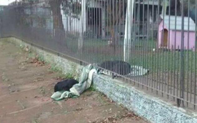 El perro callejero rescatado el año pasado por una pareja parece no haber olvidado lo que es vivir sin hogar. Foto: Suelen Schaumloeffel