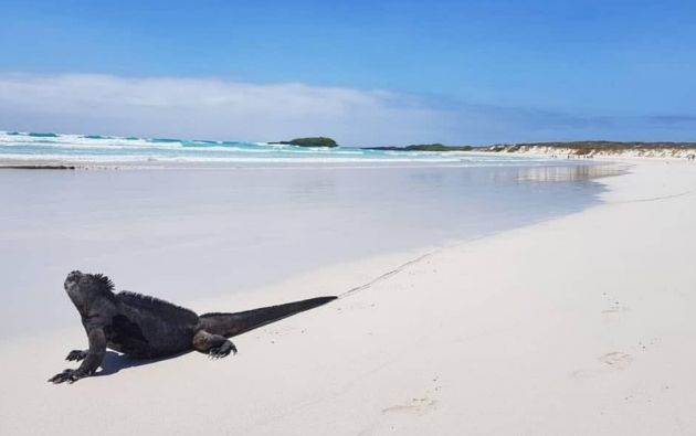 Las islas Galápagos están situadas a unos mil kilómetros de las costas continentales ecuatorianas. Foto: Instagram Bucket List.
