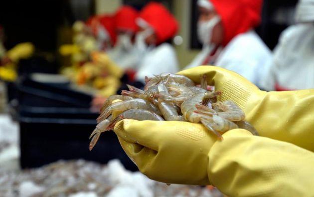 Según un estudio encomendado por el Gobierno ecuatoriano, la actual demanda brasileña por camarón es entre tres y cuatro veces superior a la oferta. Foto: archivo