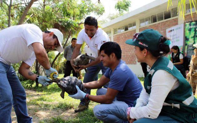 El Serfor recordó que esta especie se encuentra en peligro de extinción. Foto: Andina Noticias