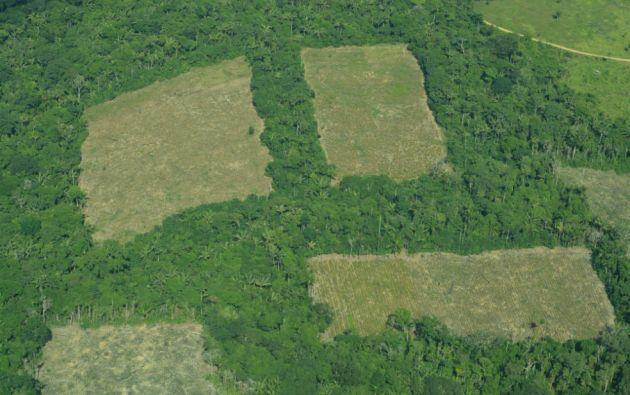 Foto: Fundación para la Conservación y el Desarrollo Sostenible (FCDS)