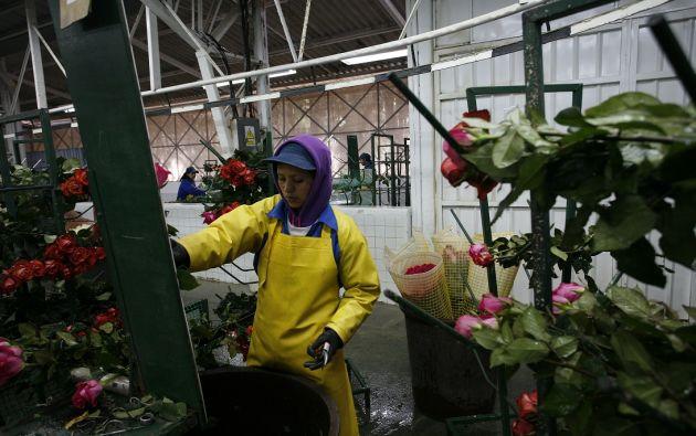De enero a noviembre del 2018 se vendieron más de 792 millones de dólares en flores ecuatorianas.