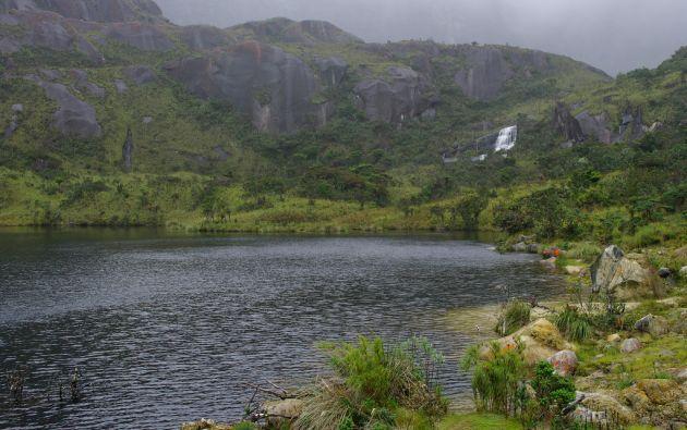 La especie fue hallada en los páramos del Parque Nacional Yacuri. Foto: Flickr Ministerio del Ambiente.