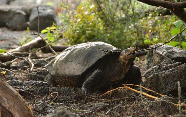 Flickr Parque Nacional Galápagos.