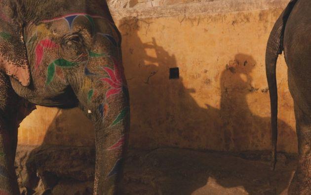 1 de 13SiguienteAnteriorAmpliar Elefantes pintados  Los elefantes han desempeñado un papel central en la historia y la cultura de la India.  charlesfreger.com Compartir Twittear  Compartir Twittear La decoración de elefantes alcanza cotas de arte en un festival anual que se celebra en la ciudad india de Jaipur.