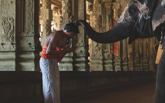 Un elefante bendice a un sacerdote en el templo - Templo de Jambukesvara, Tiruchirapali (Tamil Nadu).