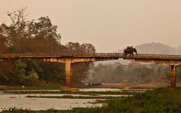 Elefante sobre un puente - Un elefante de safaris y su mahout cruzan el puente para llegar al Parque Nacional de Kaziranga (Assam).
