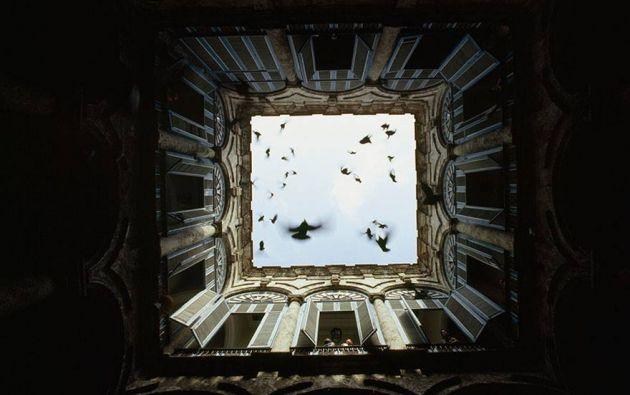 Bandada de pájaros volando en un patio cerrado en La Habana, 1987