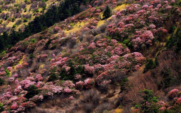 Shennongjia de Hubei, China. Este sitio consta de dos zonas en las que se encuentran los bosques primarios más vastos del centro del país.