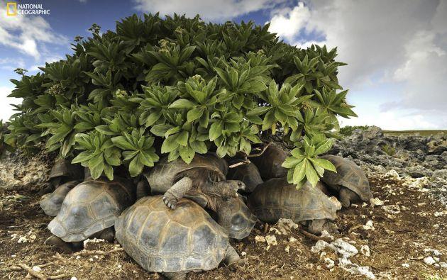El hábitat de las tortugas gigantes
