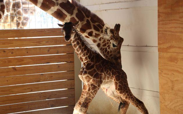 Aventura Animal Park, en Harpursville, Nueva York
