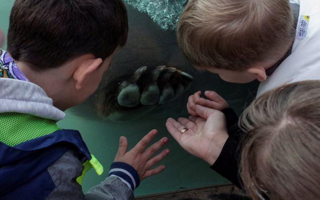 Zoológico privado en Demydiv, Ucrania