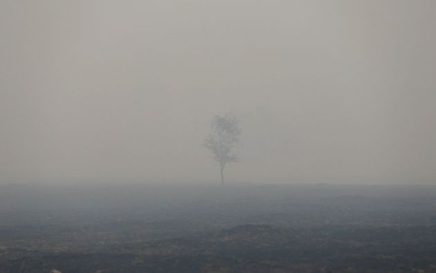 Un árbol en medio del humo a lo largo de la carretera 12 durante el fuego de las monjas en Sonoma, California