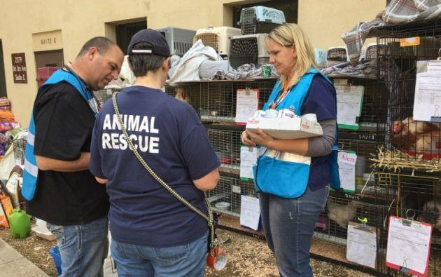 Los albergues cuentan con decenas de voluntarios responsables de alimentar, cuidar y pasear a los animales.