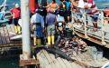 En San Mateo (Manabí), los pescadores faenan tiburones rabones en el muelle, las aletas van a un costal.